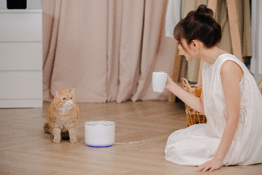 Miiibo 貓咪寶 寵物飲水機
