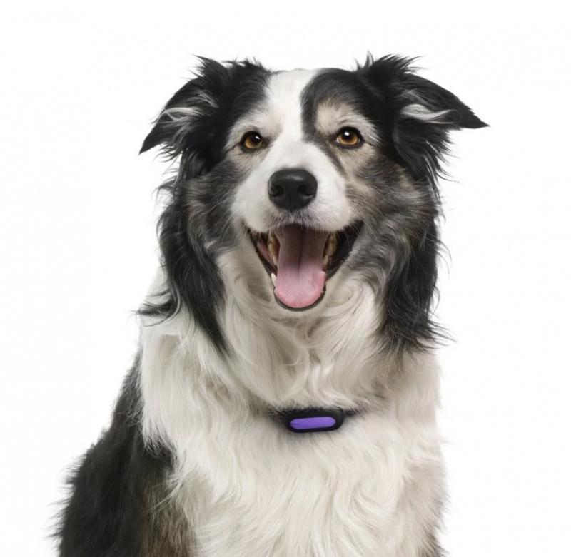 PETBLE SmartTag智能寵物活動偵測器