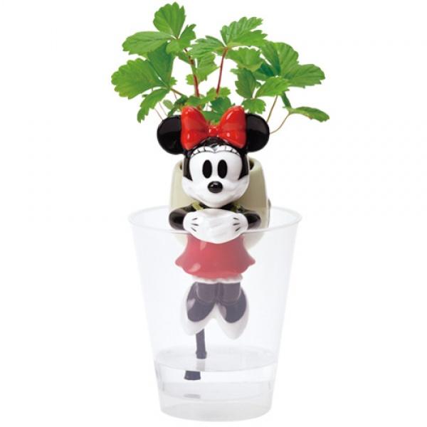 Seishin Grootale x Disney 水種植物系列