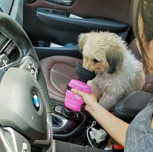 LESOTC狗用便攜式寵物水壺 [2色]