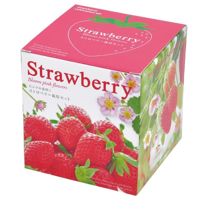 Seishin 草莓盒子