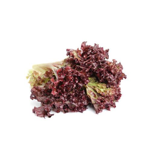 紅毛菜 [約300g]