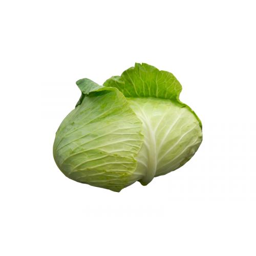 日本椰菜 [1個]
