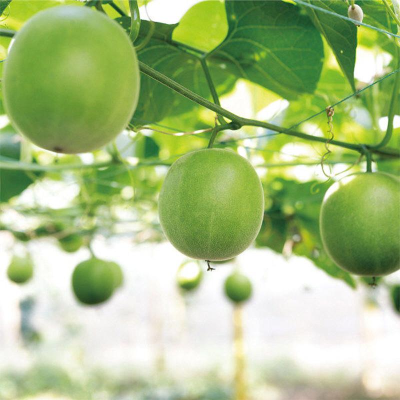 日本SARAYA 赤藻糖醇天然甜味劑代糖(羅漢果糖) 130g【市集世界 - 日本市集】