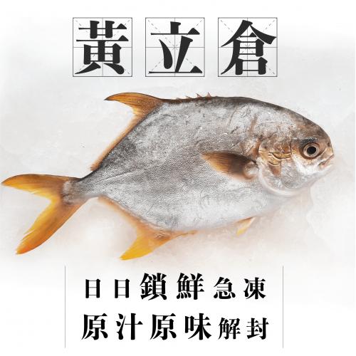 魚欄直送 - 黃立倉 [270g/一條裝]