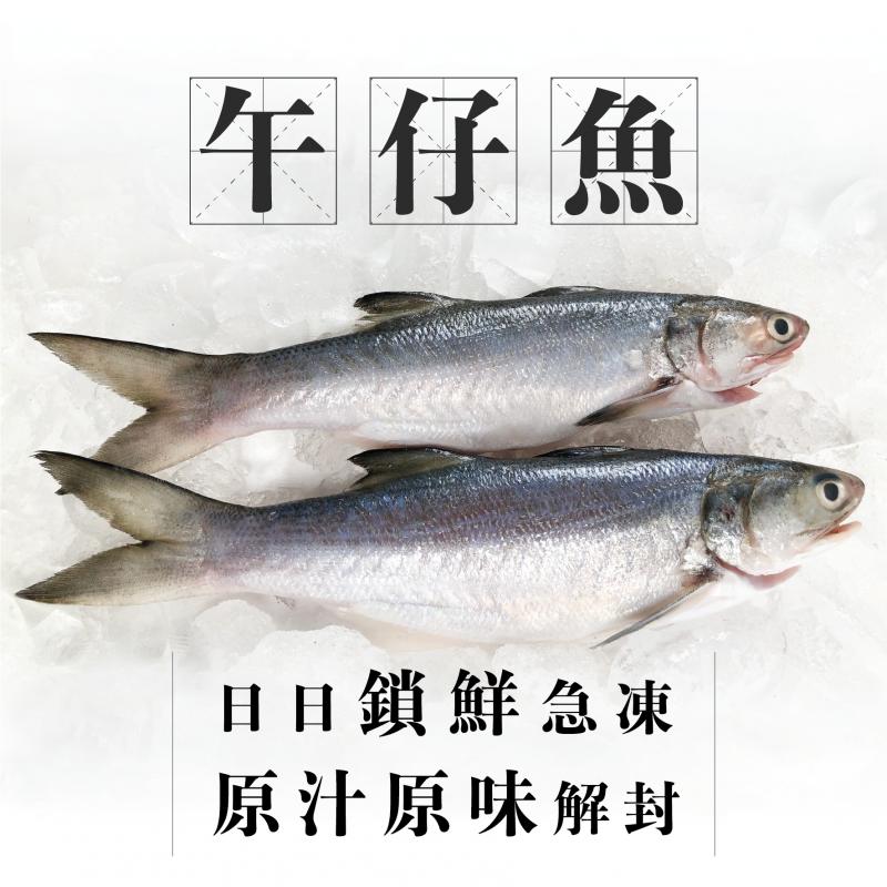 魚欄直送-台灣午仔魚(馬友魚) 一條裝(2-4人份量)