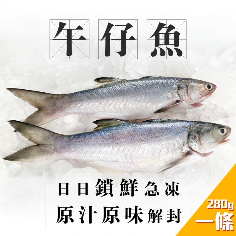 魚欄直送-台灣午仔魚(馬友魚) 一條裝 約280g (3-5人份)