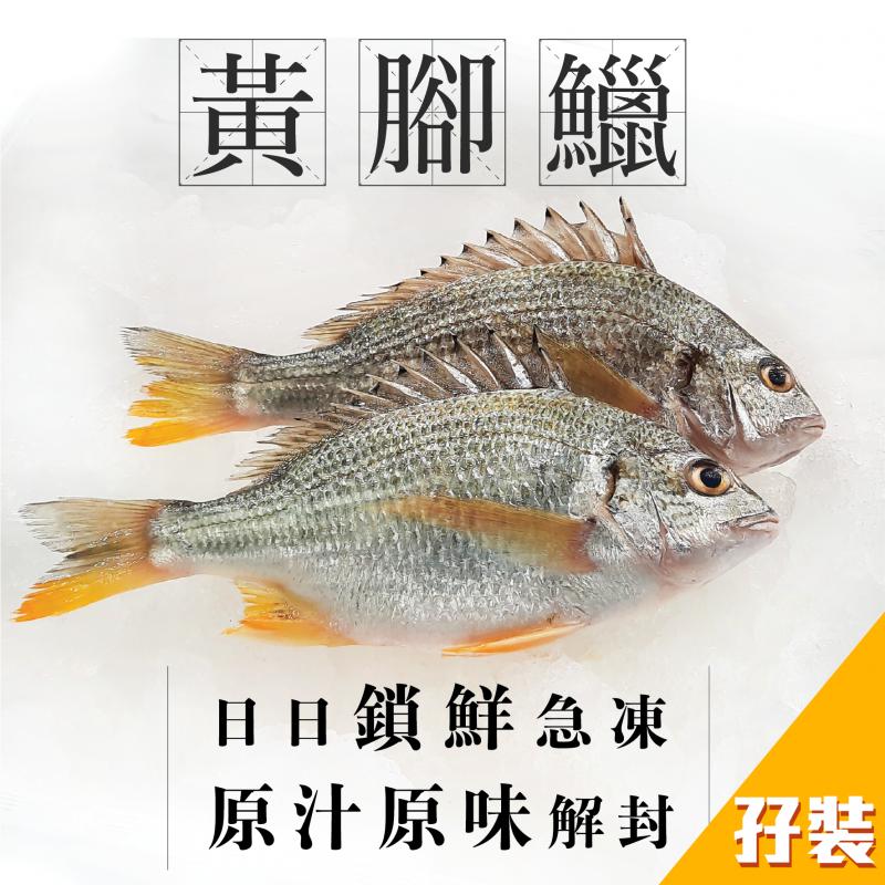 [魚欄直送]黃腳鱲孖裝310g+(已三清)