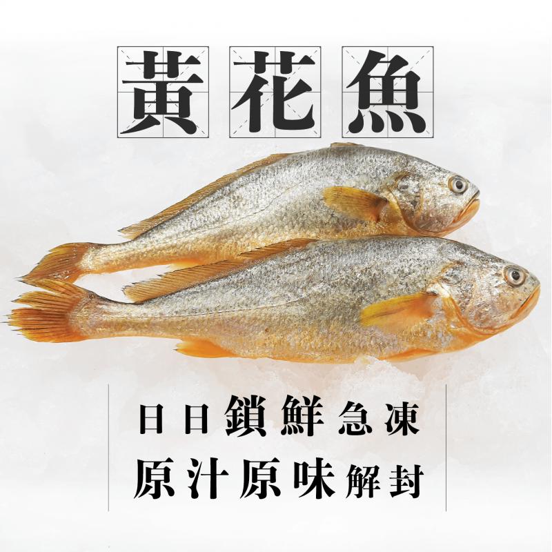 [魚欄直送]深海小黃魚(黃花魚)1條170g+ (1-2人份)