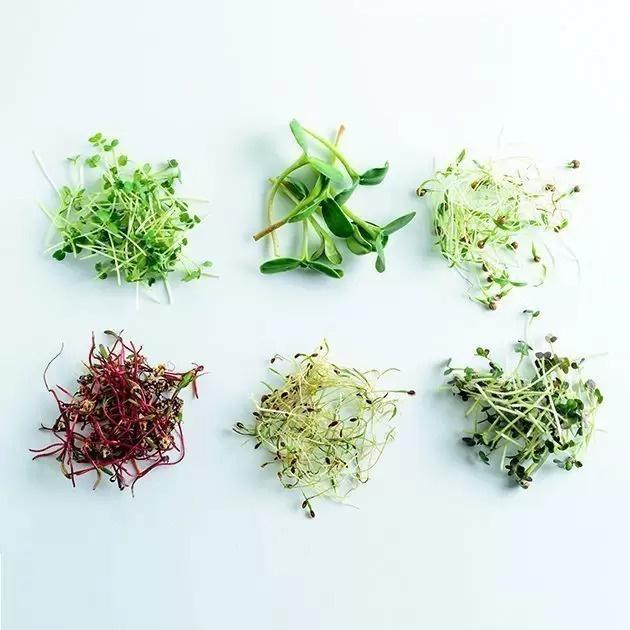 VEGEBOX™廚房-室內水培花園🌱🥬🥦