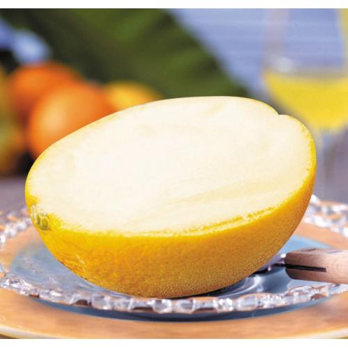 日本直送 香橙 雪葩sorbet 半個裝(1入)