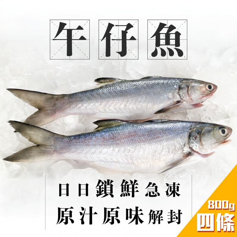 TASTIBUY - 魚欄直送-台灣午仔魚(馬友魚)-四條裝 (急凍)