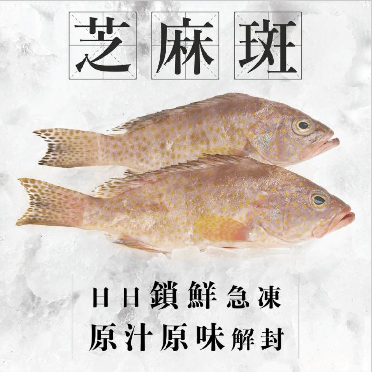 TASTIBUY - 澳洲海捕芝麻斑(1條)(已三清) (急凍)