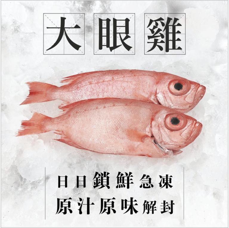 AllSeaFish - 澳洲海捕大眼雞(1條)(已三清) (急凍)