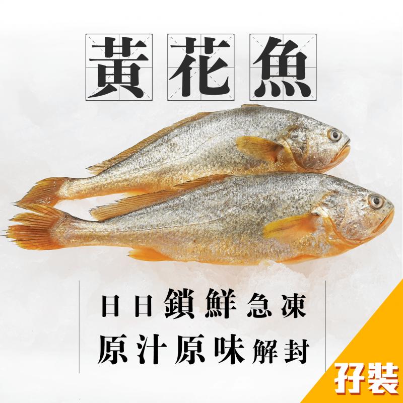 [魚欄直送]深海黃花魚孖裝300g+(已三清)