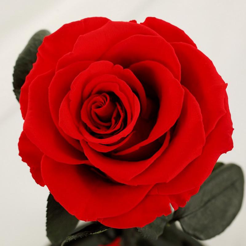 玫瑰永生花(紅)
