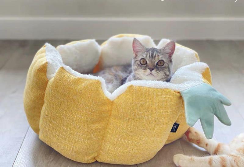 菠蘿寵物窩 (接受預訂)